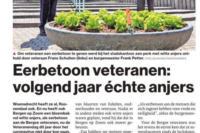 """Artikel BNDeStem: """"Eerbetoon vetereranen:volgend jaar échte anjers"""""""